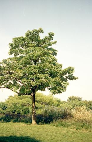 光が丘の気になる木