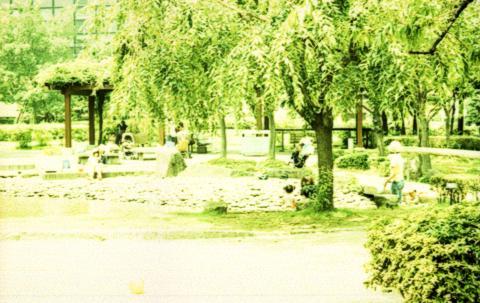 クロスプロセス-公園