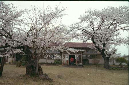 2015sakura_019